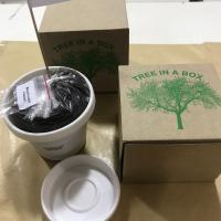 Tree In A Box At The Discovery And Viacom Networks Campaign